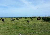 Villager ranch