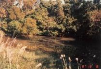 大正池塘(新池塘)